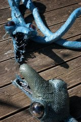 Serpentselle05