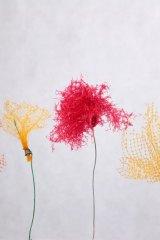 Fleurfilettire01
