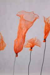Fleurorangefilet01