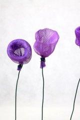 Fleurvioletfilet01